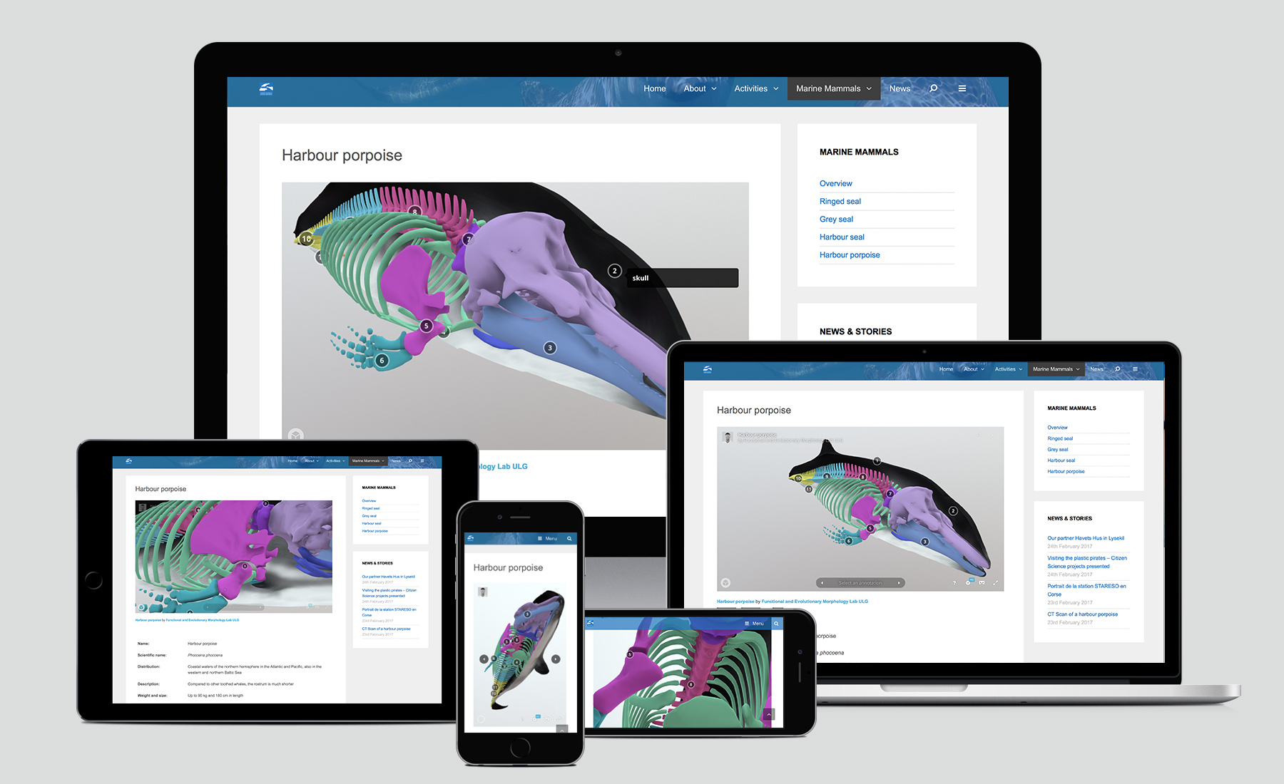 Marine Mammals Website 3D